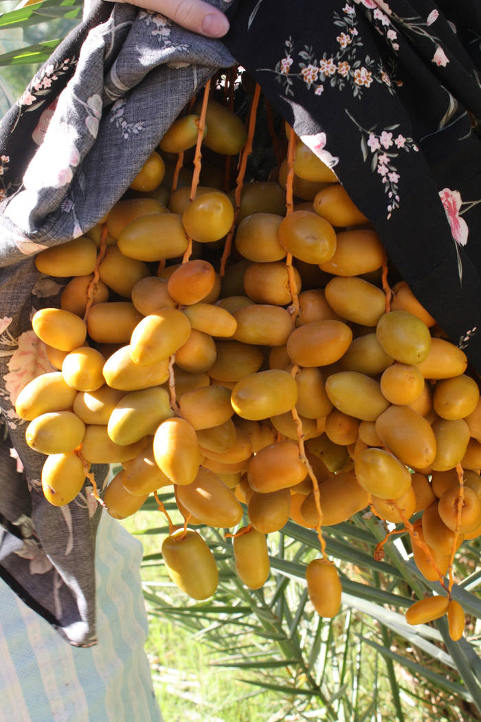 Deborah Wall Several varieties of dates are grown at the China Ranch, an oasis in the desert that dates back to the 19th century.