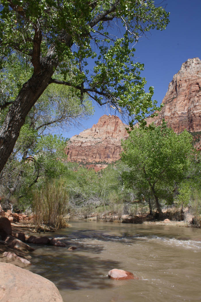 Courtesy Deborah Wall The Virgin River that flows through Utah's Zion National Park is flanked by deciduous trees, making a great habitat for local birds.