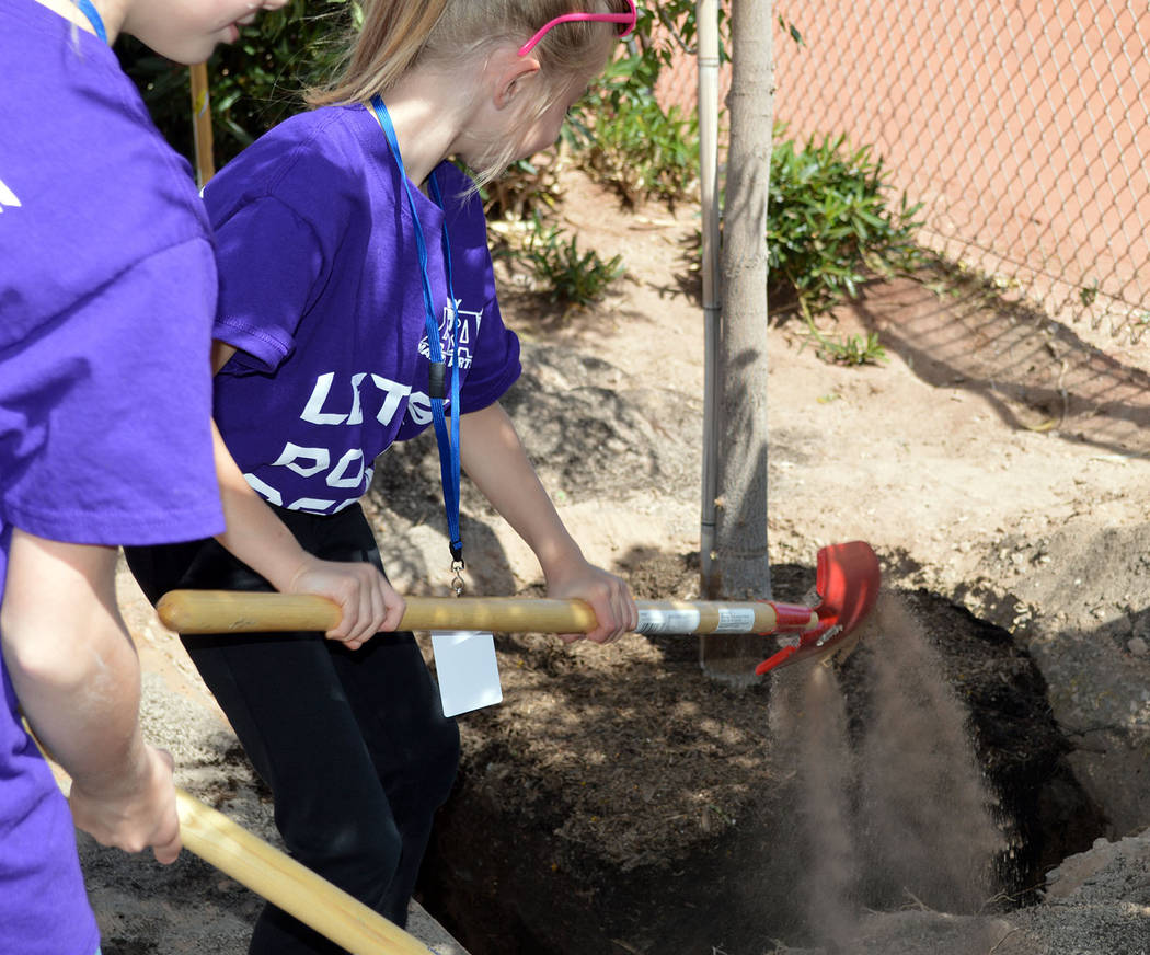 Celia Shortt Goodyear/Boulder City Review Maddie Grimes helps plant a tree outside of the Boulder City High School softball field for Arbor Day on April 27. Her older sister, Jessica, stands by re ...
