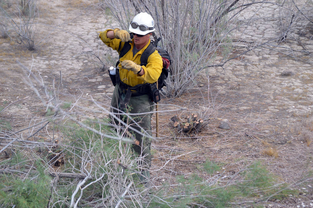 Celia Shortt Goodyear/Boulder City Review Kevin Alhers clears some brush during a practice fire scenario at Lake Mead National Recreation Area.