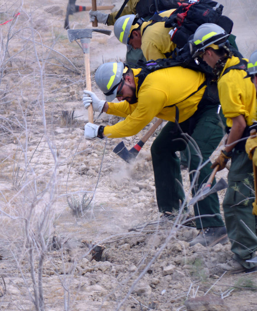 Celia Shortt Goodyear/Boulder City Review Mariano Del Real swings a Pulaski, a special hand tool used in wildland firefighting, during his rookie training day at Lake Mead National Recreation Area.
