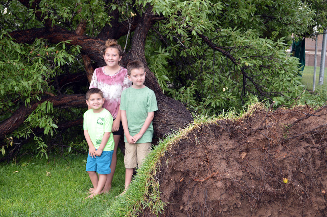 Celia Shortt Goodyear/Boulder City Review Everynn Andrade and two of her brothers, Diego, left, and Kruze witnessed the family's 41-year-old almond tree come crashing down Monday during the storm  ...
