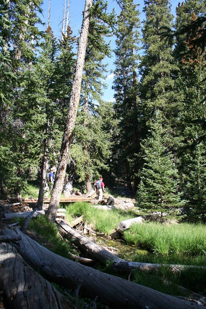 Deborah Wall The Alpine Lakes Loop Trail takes hikers through a forest of Englemann spruce and limber pine with many perennial streams.