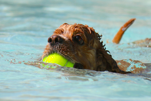 File The annual Soggy Doggy event for dogs at the Boulder City Pool will be held from 9 a.m. to noon Saturday, Sept. 9.