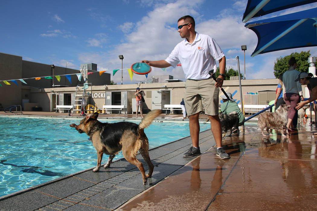 Bryce Rogers/Boulder City Review Jake Andersen, aquatic coordinator for the Boulder City Pool, throws a toy into the water for one of the participants at the annual Soggy Doggy event on Saturday.