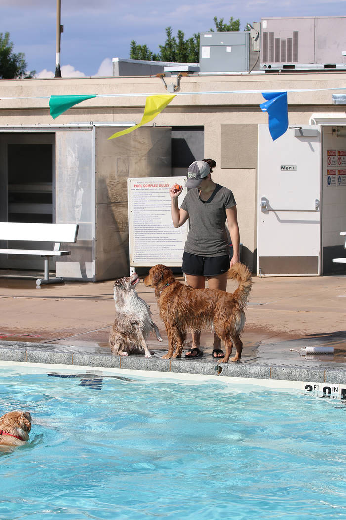 Bryce Rogers/Boulder City Review Riley watches a ball held by her owner Triscia Singleton during the Saturday Soggy Doggy event at the Boulder City Pool.