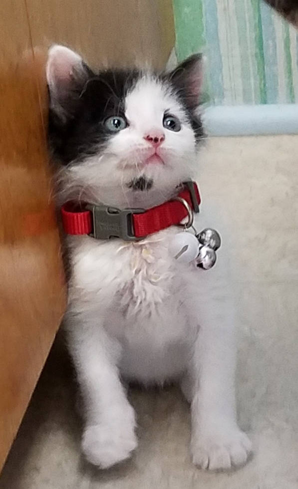 Boulder City Animal Shelter The Boulder City Animal Shelter has kittens of all shapes and sizes. Our kittens are spayed or neutered and have received their first vaccines. Stop by the shelter to t ...