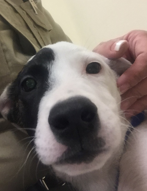 Photo courtesy Boulder City Animal Shelter Biscuit is a female mixed-breed puppy, approximately 10 weeks old. She came to the shelter as a stray and was never claimed. For more information on this ...