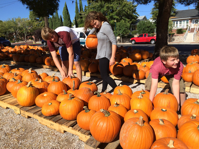 Hali Bernstein Saylor/Boulder City Review  Siblings Adam, from left, Maggie and Jack Clary search for the perfect pumpkin to carve jack-o'-lanterns on Monday at Boulder City United Methodist Churc ...