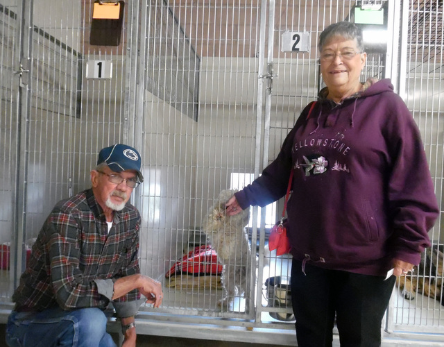 Hunter Terry/Boulder City Review Roy and Elizabeth Black were quite taken with an as-yet-unnamed stray dog that was excitedly searching for a new family as they explored the Boulder City Animal Sh ...