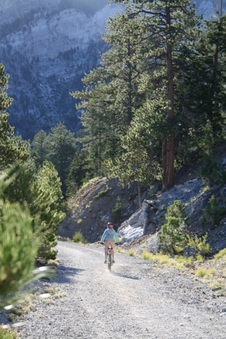 Photo courtesy Deborah Wall A mountain biker heads down the Scout Canyon Road section of the Bristlecone Trail in Lee Canyon.