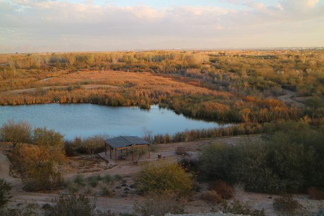Photo courtesy Deborah Wall The Eastland Park in Yuma, Arizona, offers a natural habitat for birds and wildlife as well as a network of trails for hikers, bikers and birders.