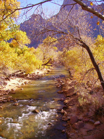 Photo courtesy Deborah Wall The North Fork of the Virgin River flows through the main area of Zion National Park in Utah.
