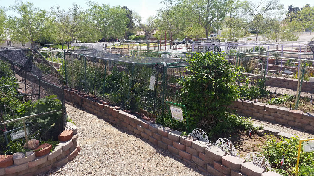 Celia Shortt Goodyear/Boulder City Review The community gardens are part of the property on Railroad Avenue that houses the old water filtration plant.