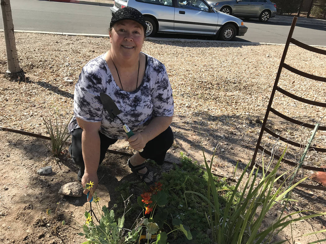 Hali Bernstein Saylor/Boulder City Review Cheryl Waites gets ready to mark Earth Day on Saturday by planting new plants and sprucing up the gardens at Teddy Fenton Memorial Park Reflections Center.