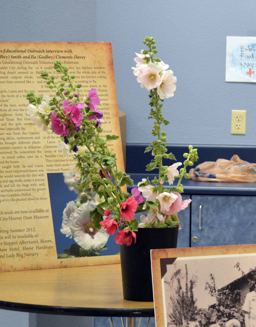 Celia Shortt Goodyear/Boulder City Review The Heirloom Hollyhock is Boulder City's official flower, and a presentation on its history was done at Andrew J. Mitchell Elementary School on Friday, Ma ...