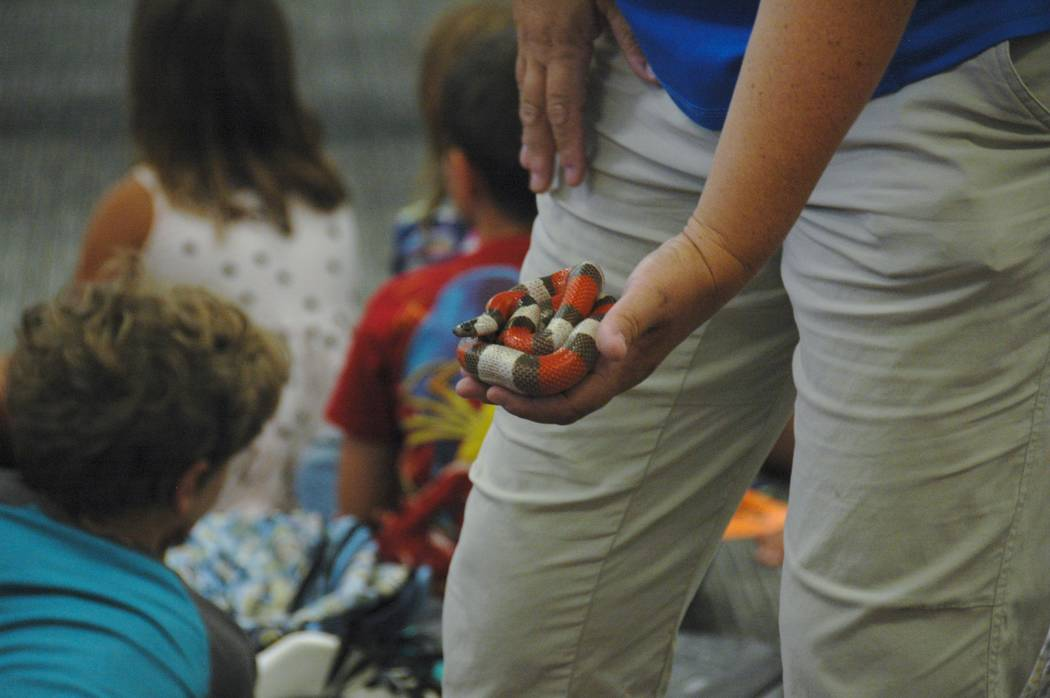 Jayme Sileo/Boulder City Review Cathy Meyer shows Boulder City Library summer reading program kick off attendees a Mexican milk snake up close.