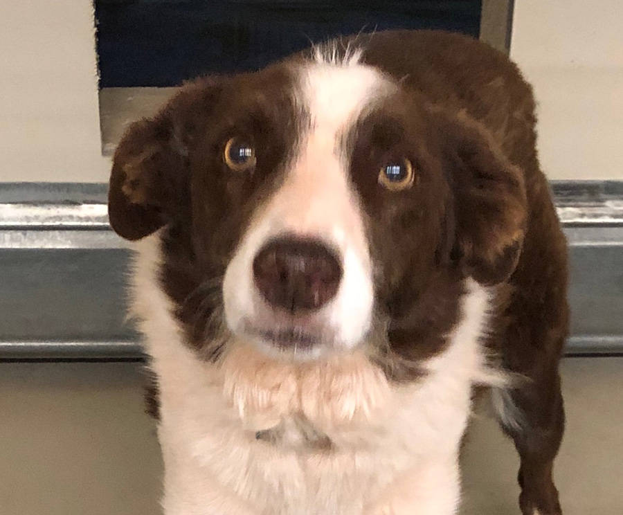 Boulder City Animal Shelter Elliot is a 3-year-old border collie who loves to play fetch with toys. Elliot is neutered, housetrained and well-mannered. For more information, call the Boulder City ...