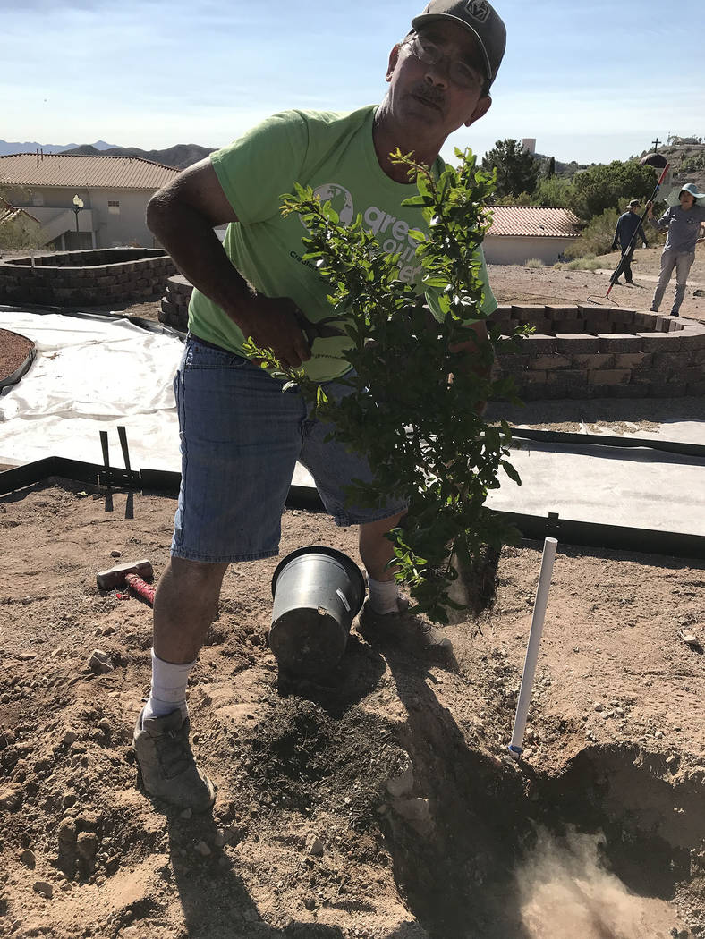 Hali Bernstein Saylor/Boulder City Review Steve Black, build manager for Green our Planet, help volunteers plant a wonderful pomegranate at St. Jude's Ranch for Children on Saturday in its new com ...