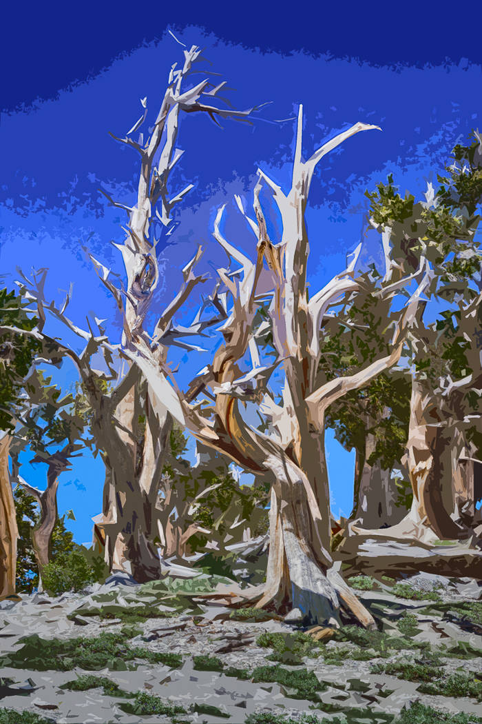 "Boulder City Art Guild Works by digital photographer Donovan Lockett will be exhibited at Boulder City Art Guild's gallery throughout August as part of the ""Trees of the Mount Charleston Wildern ..."