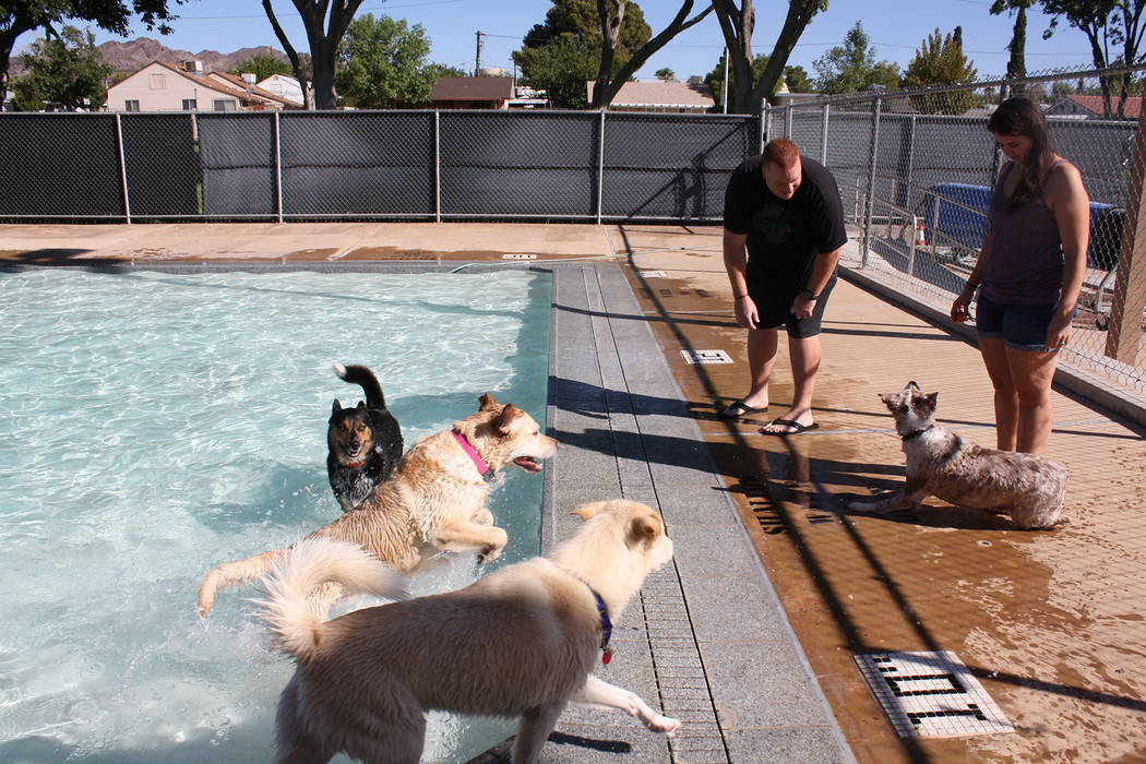 Cheree Brennan/Boulder City Parks and Recreation Department Jaren and Tricia Singleton brought their Australian shepherd Rylee to Saturday's, Soggy Doggy pool pawty at Boulder City Pool. Also enjo ...