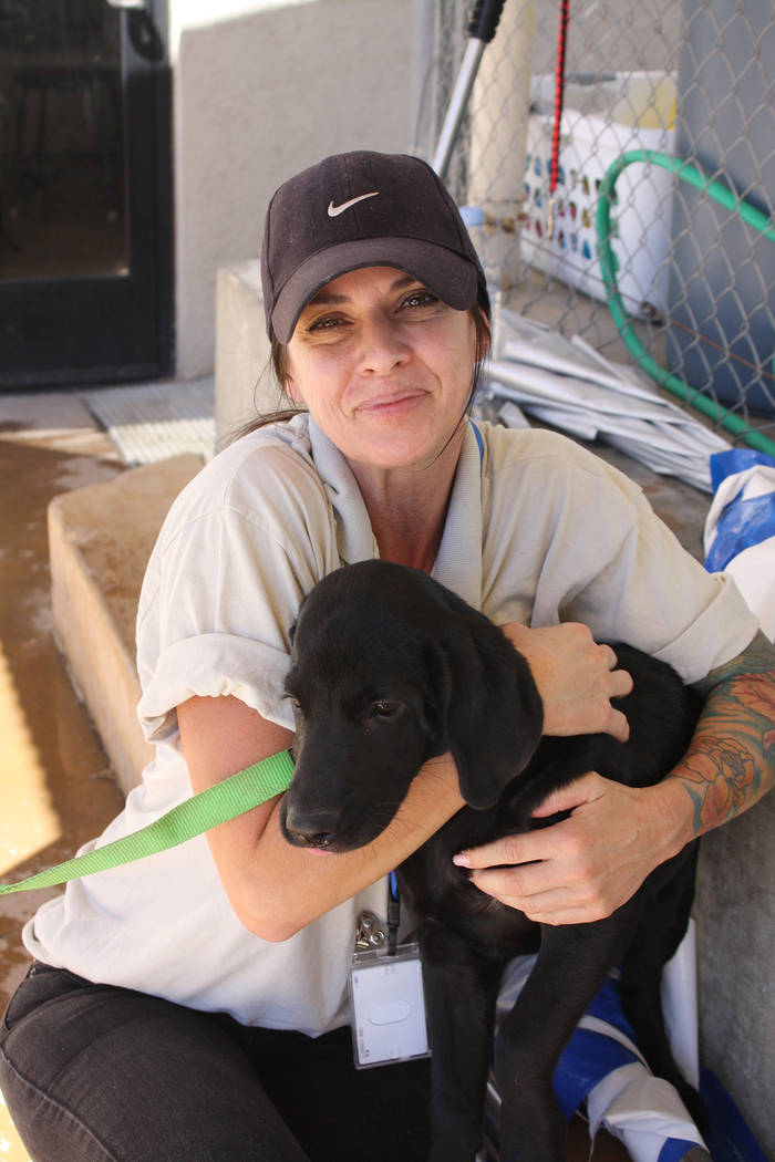 Cheree Brennan/Boulder City Parks and Recreation Department Rebecca Schuster from Boulder City Animal Control hugs Sally, a Black Labrador, during Saturday's Soggy Doggy event at the Boulder City ...
