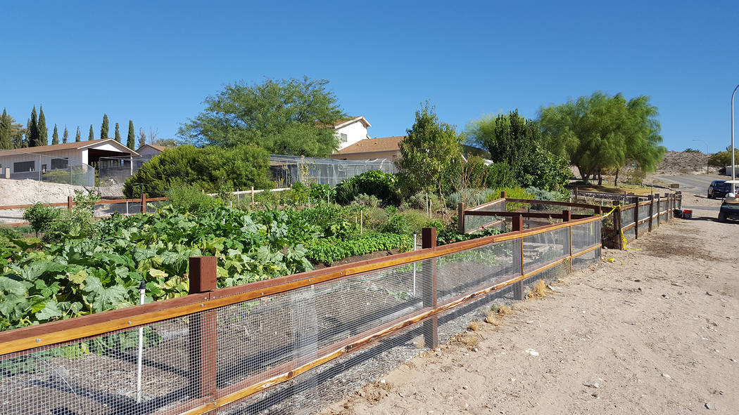 Dale Napier/Boulder City Review Herbs by Diane, which is marking its 10th anniversary, grows herbs and vegetables at its farm on San Felipe Avenue.