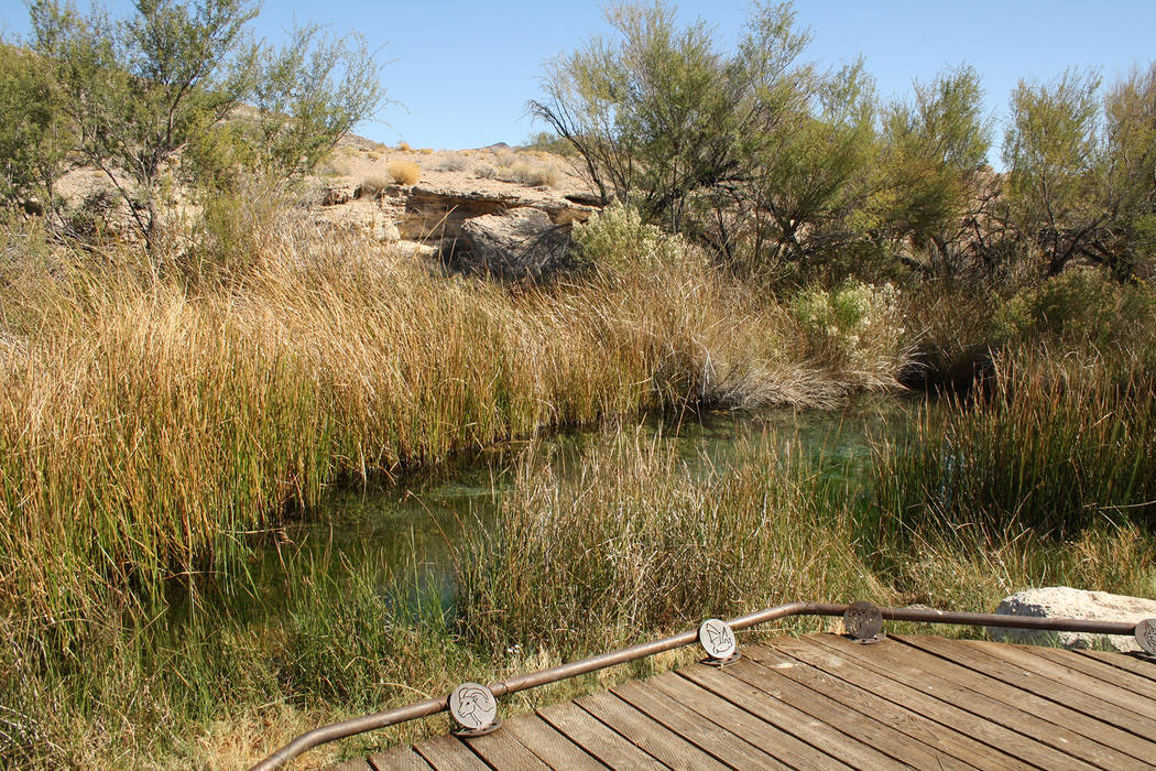 Deborah Wall The King's Pool at Ash Meadows National Wildlife Refuge in Nevada acan be found at the Point of Rocks area. Desert bighorn sheep can sometimes be seen here.