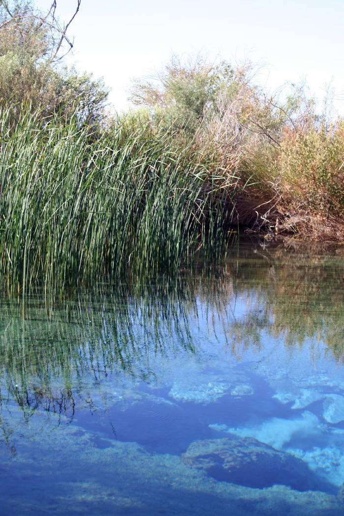 Deborah Wall Ash Meadows National Wildlife Refuge encompasses about 24,000 acres, including seven major springs and their accompanying wetlands.