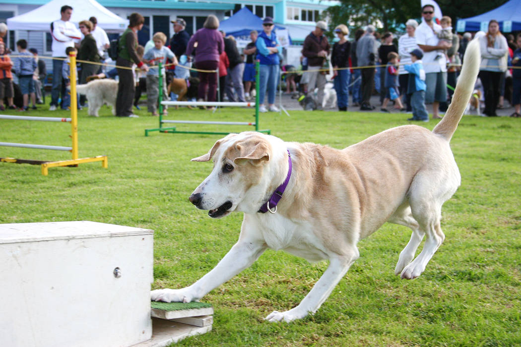 Thinkstock A K9 Thanksgiving festival, complete with flyball demonstrations, will be held Saturday, Nov. 24, 2018, at Hoover Dam Lodge, 18000 Highway 93, Boulder City.