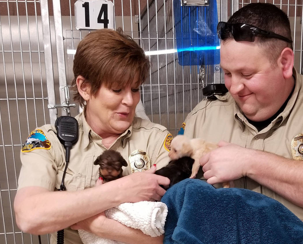 (Celia Shortt Goodyear/Boulder City Review) Boulder City Animal Control Supervisor Ann Inabnitt and Animal Control officer Brendan Hanson prepare to bottle feed three 4-week-old puppies that are a ...