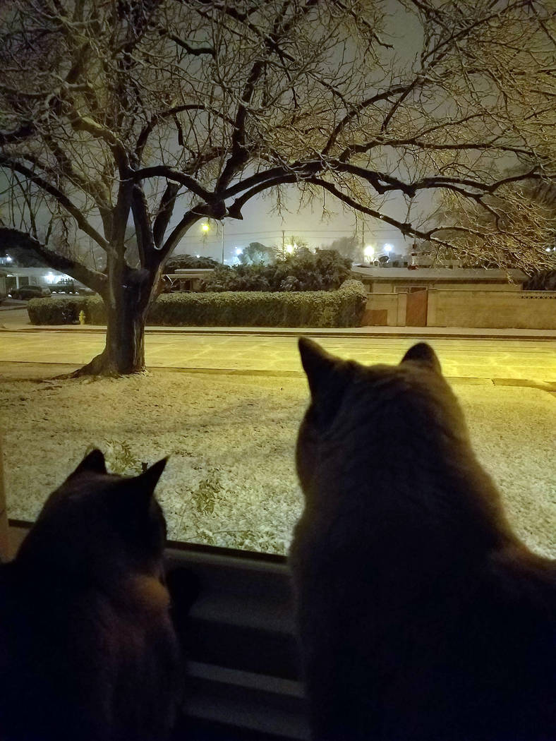 (Kristina Weckesser) Chloe, left, and Jewel experience snow for the first time Sunday, Feb. 17, in Boulder City.