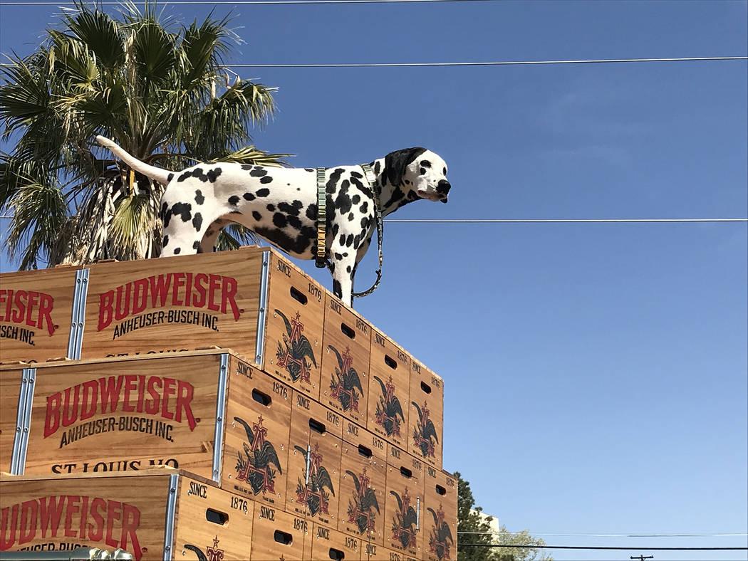 (Hali Bernstein Saylor/Boulder City Review) Anheuser-Busch brought along its dalmatian mascot w ...