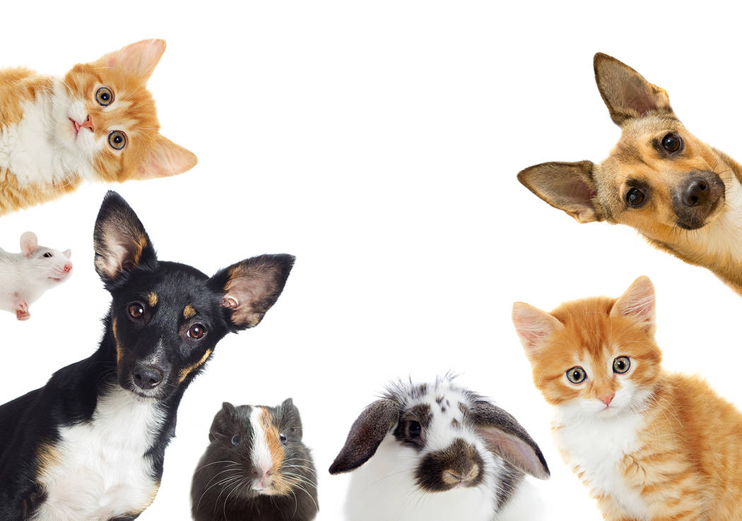 A pet adoption event will be held from 11 a.m. to 1 p.m. Saturday, April 6, at Boulder City Lib ...