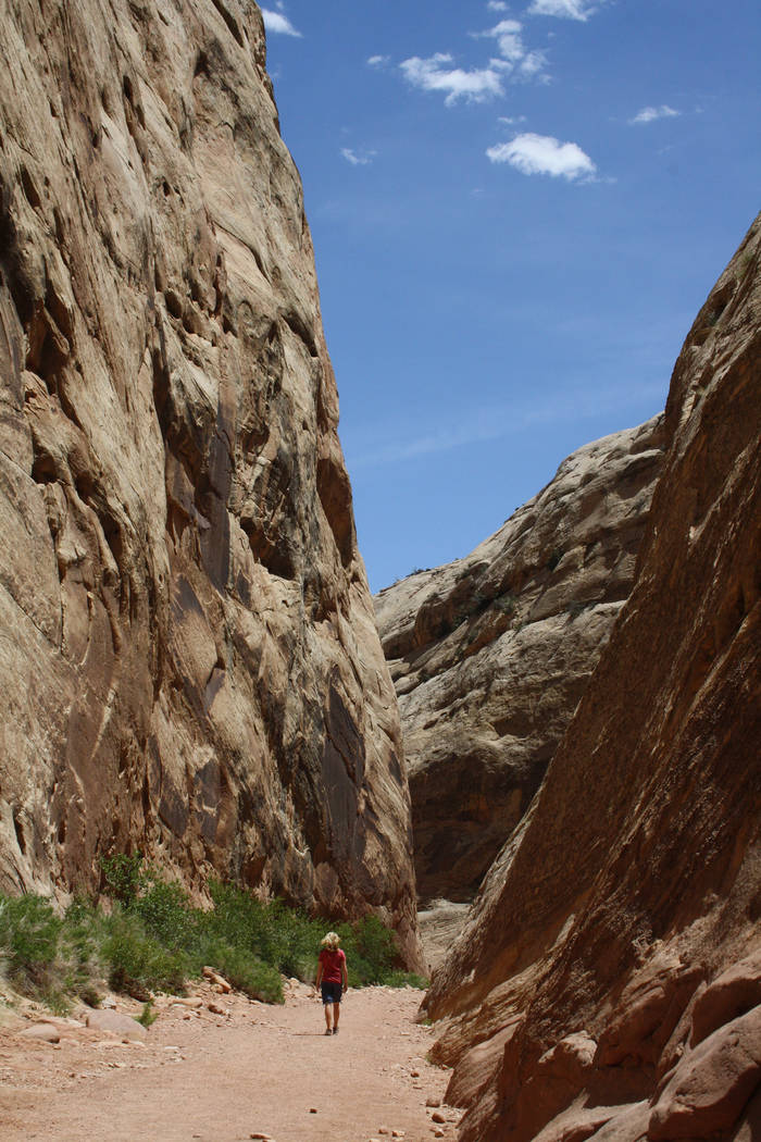 (Deborah Wall) The Capitol Gorge Trail was formally the main east/west road through this remote ...