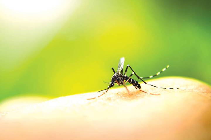 (Southern Nevada Health District) The first West Nile virus of the season was found in mosquito ...