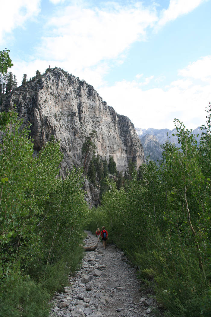 (Deborah Wall) The Cathedral Rock trail at Mount Charleston in Nevada offers a chance to hike a ...