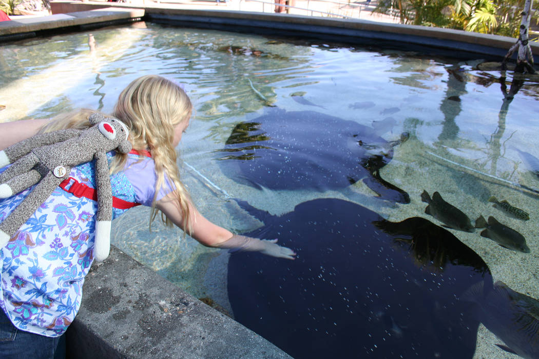 (Deborah Wall) Children can have a hands-on experience at the ray touch pool at the Aquarium of ...