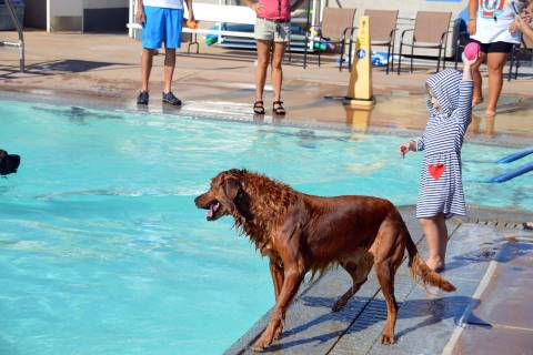 Celia Shortt Goodyear/Boulder City Review Abby Burke throws a ball into the water for her dog, ...