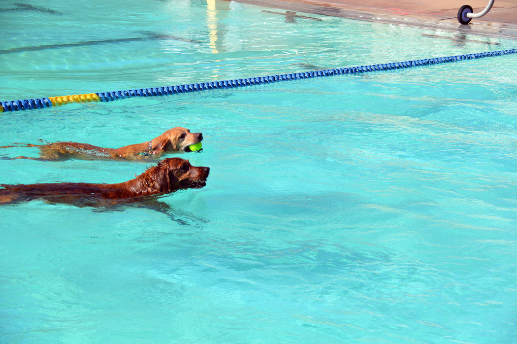 Celia Shortt Goodyear/Boulder City Review After retrieving the ball first, Beau races Lola to t ...