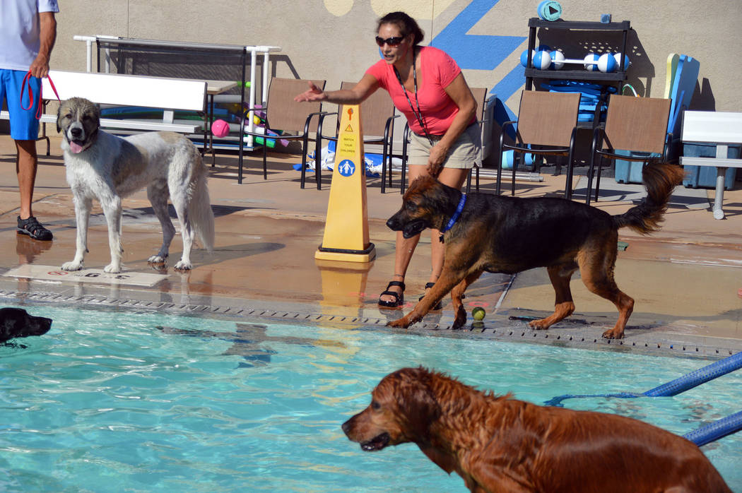 Celia Shortt Goodyear/Boulder City Review Nancy Kolander throws a ball into the pool for her do ...