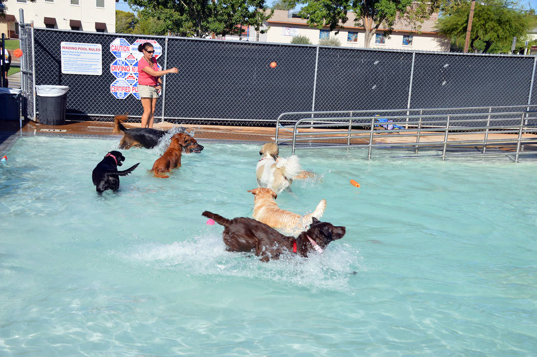 Celia Shortt Goodyear/Boulder City Review Several of the dogs at the Soggy Doggy play in the wa ...
