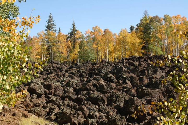 (Deborah Wall) Aspens flank an ancient lava bed near Navajo Lake on the Markagunt Plateau in so ...
