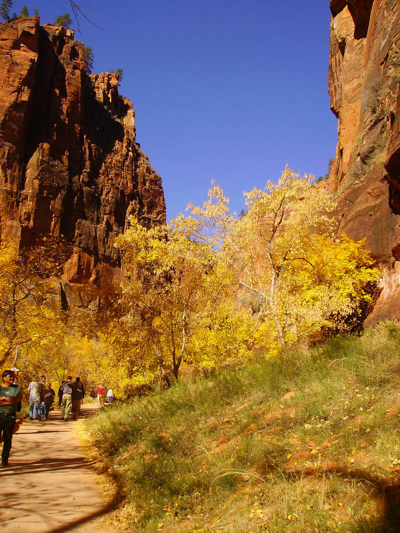 (Deborah Wall) The deciduous trees along the Riverside Walk in Zion National Park in southern U ...