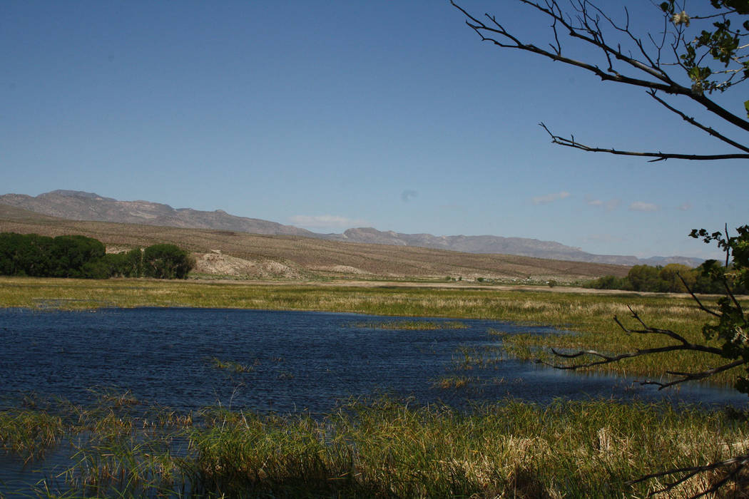 (Deborah Wall) Pahranagat National Wildlife Refuge, in nearby Lincoln County, encompasses 5,382 ...