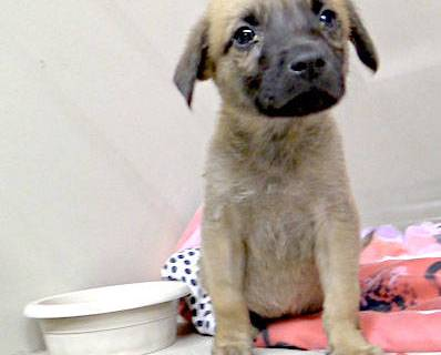 (Boulder City/Tim Dewar) Although this little guy has been adopted, there will be many other an ...