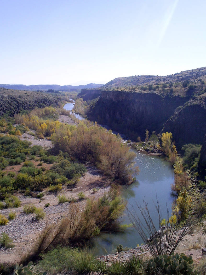(Deborah Wall) The perennial flowing Verde River in Arizona provides a wonderful habitat for re ...