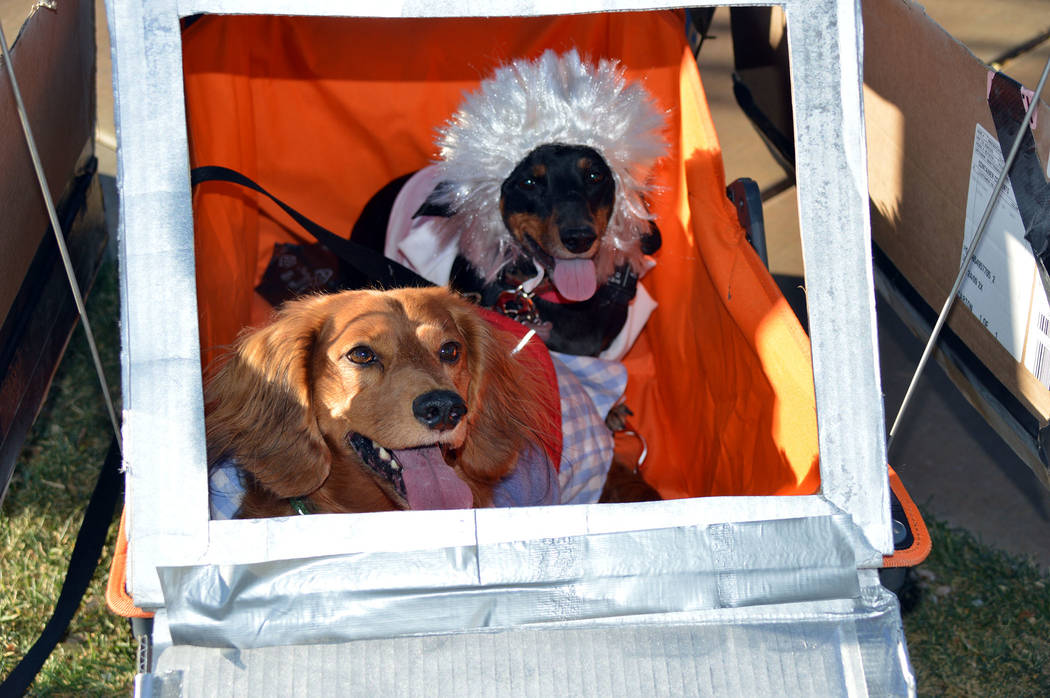 Celia Shortt Goodyear/Boulder City Review Pets also joined in with the fun at the 2019 Trunk or ...