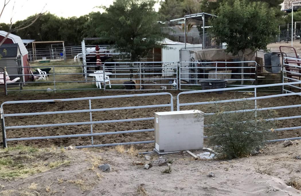 (Hali Bernstein Saylor/Boulder City Review) Five horses at the Boulder City Horseman's Associ ...