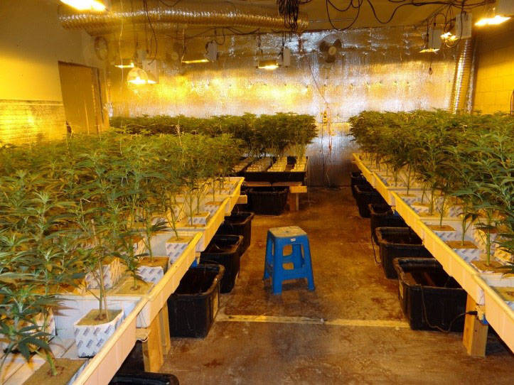 Boulder City Boulder City Police seized approximately 800 marijuana plants, weighing about 360 ...